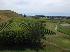 vineyard, wine, grapes, honey moon, new zealand
