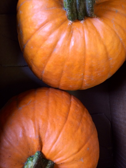 pumpkin_fall_autumn_cooking tips